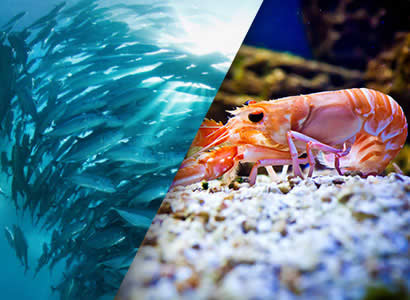 Krill Oil vs Fish Oil – the great debate